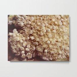 Xenia Coral Pulsing Metal Print