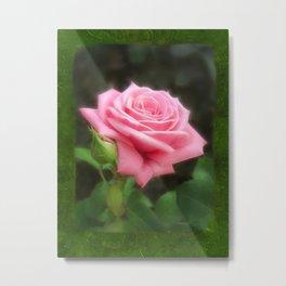 Pink Roses in Anzures 3 Blank P1F0 Metal Print