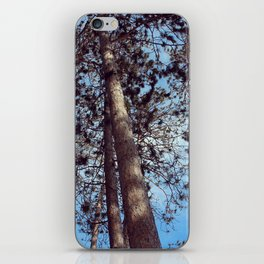 The Cathedral Pines iPhone Skin