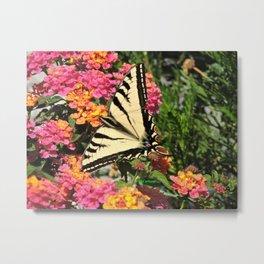 Swallowtail on Lantana Metal Print