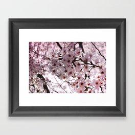 Sakura in Kyoto Framed Art Print