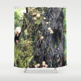 Trail of Puffballs Shower Curtain