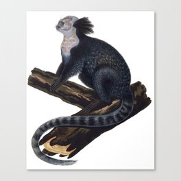 Tufted-Ear Marmoset Canvas Print