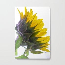 Sunflower VI Metal Print