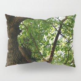 Virginia Forest with Light Shining Through Pillow Sham