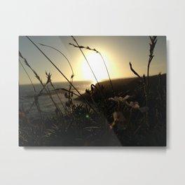 Through the Grass Metal Print