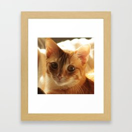 Lovely Eyes Framed Art Print