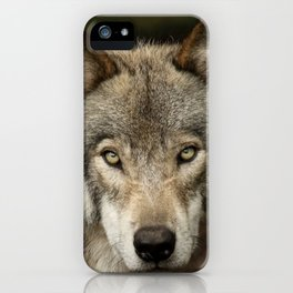 The intensity of the timber wolf iPhone Case