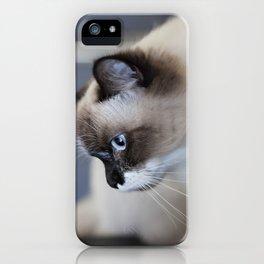 Ragdoll Cat Iphone Cases Society6