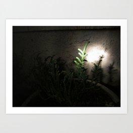 Nighttime in the Garden, 5 Art Print
