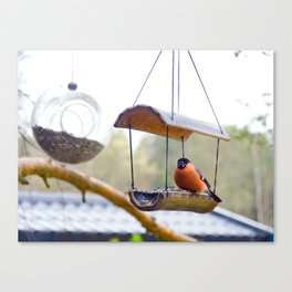 Eurasian bullfinch Canvas Print