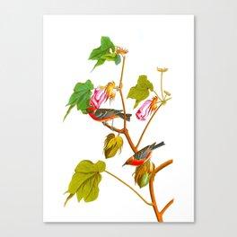 Bay-breasted Warbler Bird Canvas Print