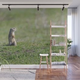 Souslik (Spermophilus citellus) European ground squirrel in the natural environment Wall Mural