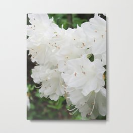 Azalea Flowers with the morning dew Metal Print