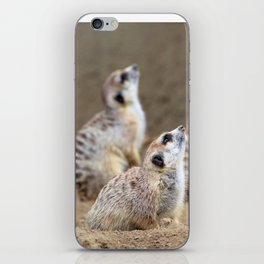 Meerkats - We're on the Lookout iPhone Skin