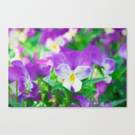 purple pansy in late spring Canvas Print