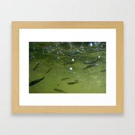 Noli fishes in GREEN water Framed Art Print