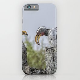 Southern Yellow-billed Hornbills Mating Display, No. 1 iPhone Case