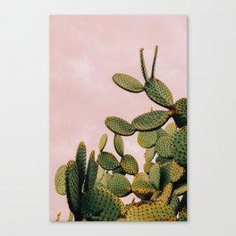 Cactus on Pink Sky Canvas Print