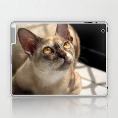 Study of a Cat Laptop & iPad Skin