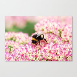 pink flowers and bee Canvas Print