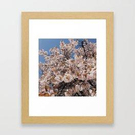 New York Cherry Blossoms Print Framed Art Print