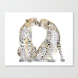 cheetah kiss two Canvas Print