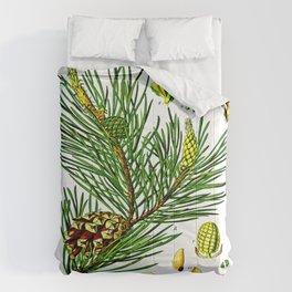 Pinus sylvestris Comforters
