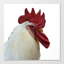 old white rooster Canvas Print