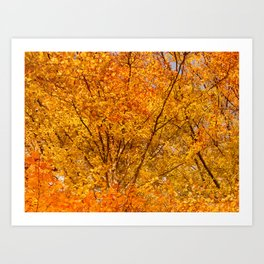 Gold Autumn Leaves Art Print