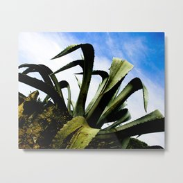 Large Giant Green Aloe Plant with Bright Blue Sky Metal Print