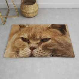 Portrait of red fluffy cat Rug