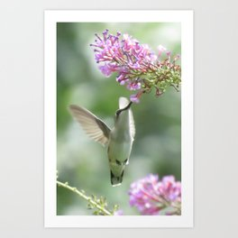 Hummer in Flight Art Print