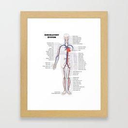 Human Circulatoy System Chart Framed Art Print