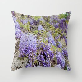 Beautiful Wisteria in bloom at garden in Tuscany, Italy Throw Pillow