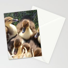 Ducklings Stationery Cards