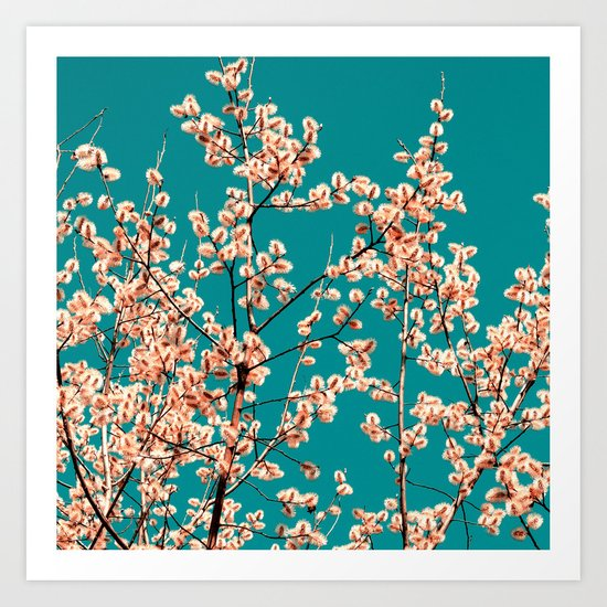 willow catkin II Art Print