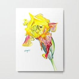 Yellow Iris Metal Print