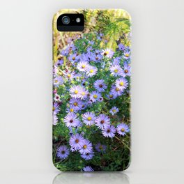 Summer Daisies Photography iPhone Case