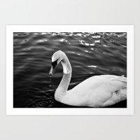 black swan Art Prints featuring Swan by Ana Pontes