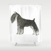 schnauzer Shower Curtains featuring Schnauzer by Archive Arrow
