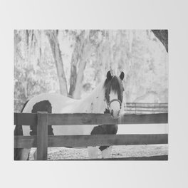 Gypsy Vanner Beauty Throw Blanket