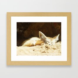 Fennec fox (Vulpes zerda) Framed Art Print