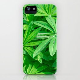 Beautiful green foliage with dew drops on the leaves in sunny day iPhone Case