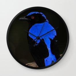 Asian Fairy-bluebird (Male) Wall Clock