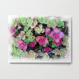 Pistachio and Raspberry Succulents Metal Print
