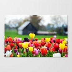 Barn and Tulips, Woodburn Tulip Festival Canvas Print