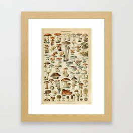 Adolphe Millot - Nouveau Larousse Illustré - Champignons (Mushrooms and Fungi) (1910) Framed Art Print