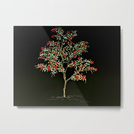 Berry Tree by Barbara Chichester Metal Print