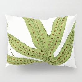 Edward Joseph Lowe - Polypodium Peltideum Pillow Sham